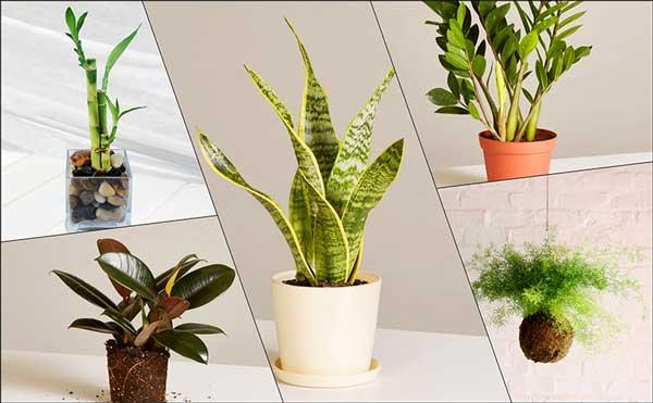 Tips trang trí cây xanh trong nhà không thể bỏ qua 1