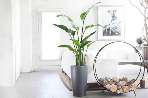 Tips trang trí cây xanh trong nhà không thể bỏ qua 2